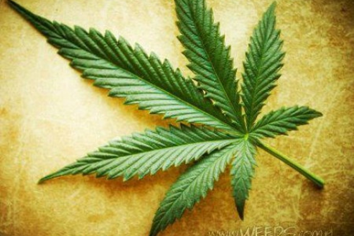 Spain Study Confirms Hemp Oil Cures Cancer