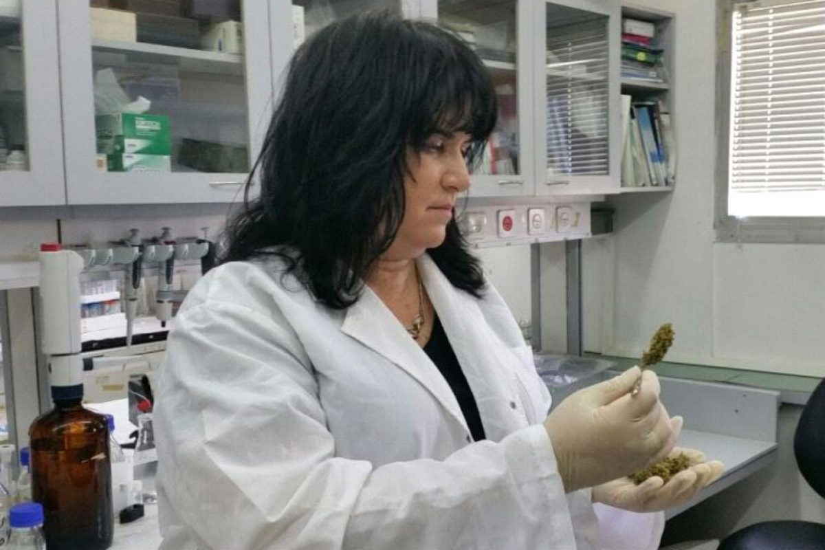 narrative on medical marijuana research Neuroscientist staci gruber is studying the long-term effects of medical marijuana on neuroscientist studies long-term effects of for marijuana research.