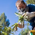 Inside DEA Ban on Marijuana Extracts