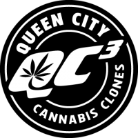 Queen City Cannabis Clones available at Champlain Valley Dispensary in Burlington, VT