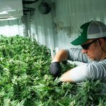 Meet Seth Gillim: Senior Manager of Cultivation