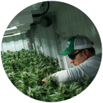 Cannabis careers in Vermont - Champlain Valley Dispensary
